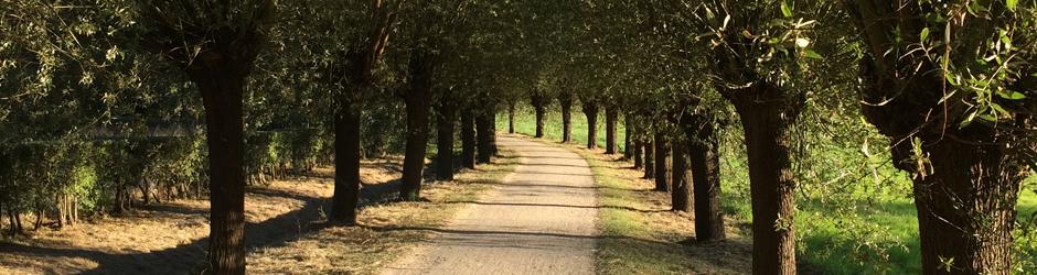 Inventarisatie van bomen voor slim groenbeheer